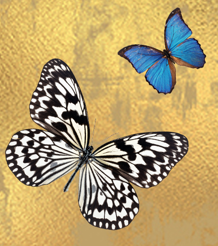 TAIWANfest Exhibition - My Butterfly Effect